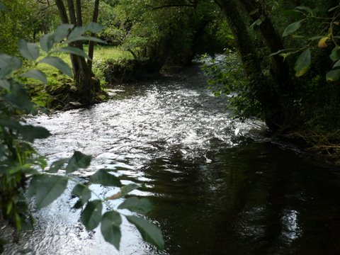 A shaded pool on the River Taw, Devon